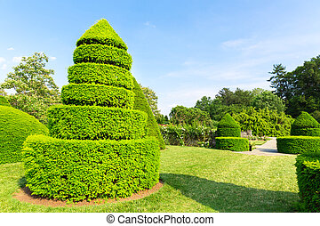 Trees trimmed in the shape of pyramids. Summer botanical...