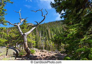 Dry tree against mountain with evergreen woods - Dry tree...