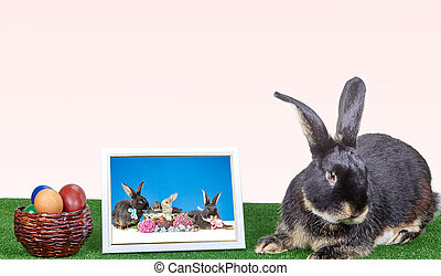 On the green cover of the rabbit next to a photograph in a...