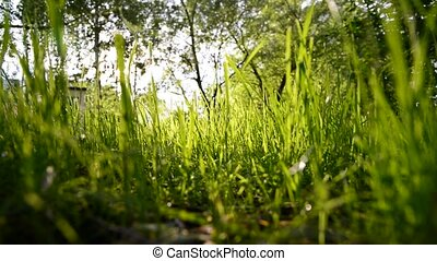 View of green grass from below - View of the green grass...