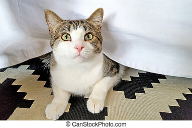 tabby cat peeking under bed skirt - tabby cat peeking from...