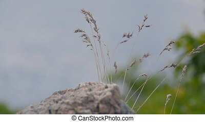 grass grows on the stone