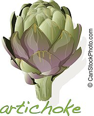 artichoke vector isolated on white background