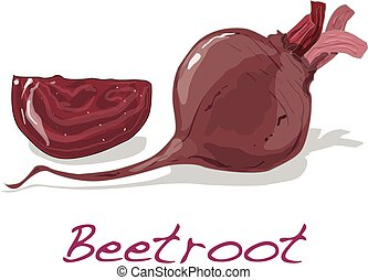 Fresh beetroot. Vector. - Fresh beetroot isolated on white....
