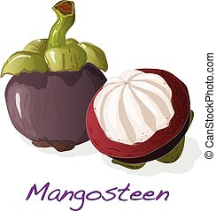 Mangosteen isolated. Vector. - Ripe mangosteen isolated on...