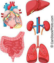 Different organs of human illustration