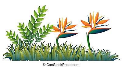 Bird of paradise in garden