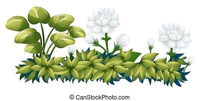 White jasmine flowers in the bush illustration