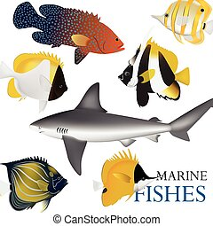 01 Marine fish-01 - tropical fish collection marine vector...