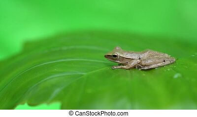 Frog on the leaf - Little frog on a green leaf after the...
