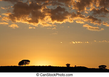 African sunrise with silhouetted trees and clouds, Kalahari...