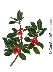 Holly Berry Leaf Sprig - Holly leaf sprig with red berries,...