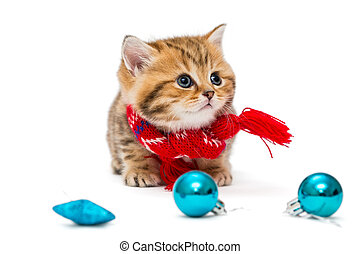 Cute kitten in a red scarf - Cute kitten breeds British...