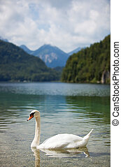 Alps lake with swan