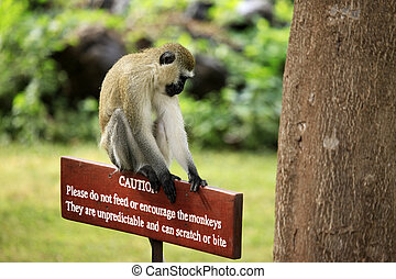 Monkey sitting on a wooden sign with a warning that...