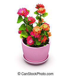 Red flowers in pot - Creative abstract 3D render...