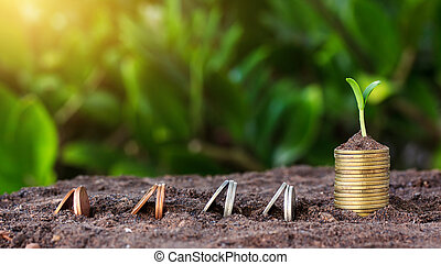 Money growth and seedling on top. concept coins in...