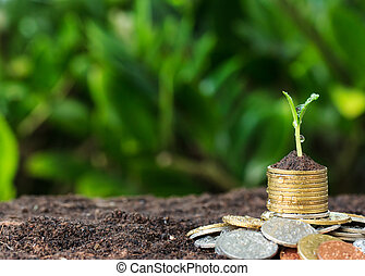 Money growth and seedling on top. concept coins in soil