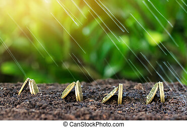 Money growth and rain on top. concept coins in soil and...