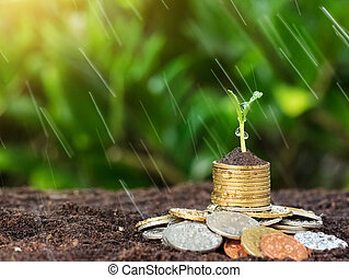 Money growth, seedling and rain on top. concept coins in...