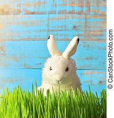 復活節, 很少, 草, 綠色,  bunny