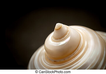 Seashell - Detail of a seashell on a black background