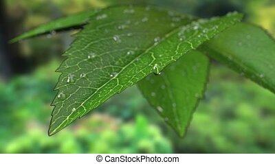 Drops of rain on a leaf.
