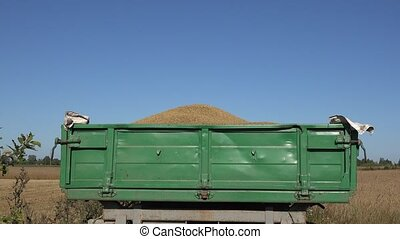 trailer full of thresh grain at harvest on sky background.