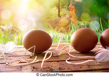 Freshly picked eggs on wooden table and field with chickens...
