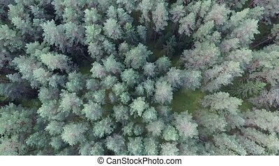 Vertical Flight Over The Forest 3