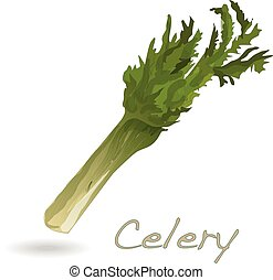 Celery vector isolated on white background