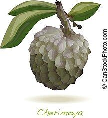 Custard apple or cherimoya vector isolated