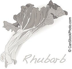 fresh picked organic rhubarb