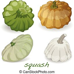 Scalloped custard squash vector (Cucurbita pepo var....