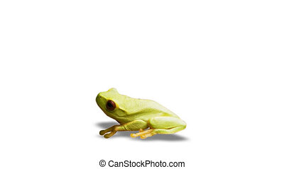 frog on white background with alpha channel image courtesy...