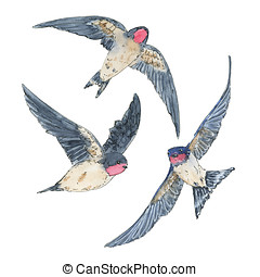 hand drawn set of watercolor isolated bird swallow on white...