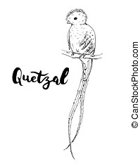 hand drawn graphic isolated bird Quetzal with handwritten...