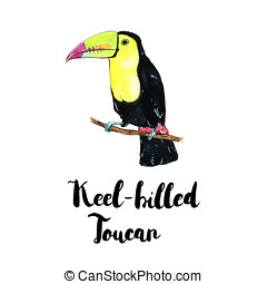 hand drawn watercolor isolated bird Keel billed Toucan with...