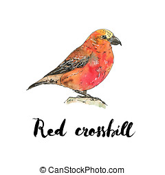 hand drawn set of watercolor isolated bird  red crossbill on white background