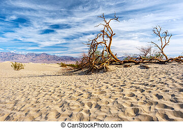 Death Valley National Park - Mesquite dunes. California,...