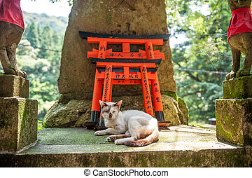 Wooden Torii Gates and cat - Torii Gates at Fushimi Inari...