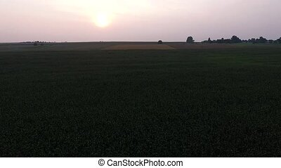 Flying Over The Corn Field 17