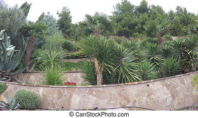 Flowerbeds with palm trees - Near stone wall number of palm...