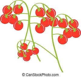 Cherry tomatoes on white background. Vector illustration.