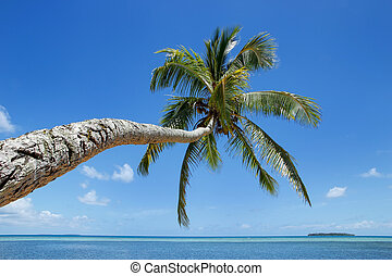 Leaning palm tree at Makaha'a island near Tongatapu island...