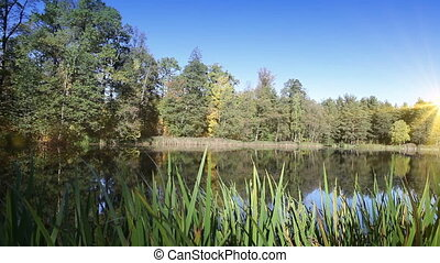 autumn wood is reflected in the lake in a sunny day,