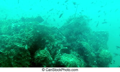Big pack of tropical fishes over a coral reef,