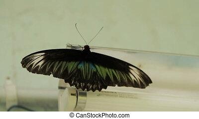 Butterfly sits on lantern, Kuala Lumpur, Malaysia.