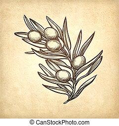 זית, וקטור, דוגמה, ענף