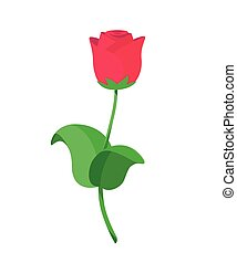 Vector illustration of single red roses in flat style
